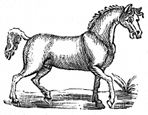 horse dingbat
