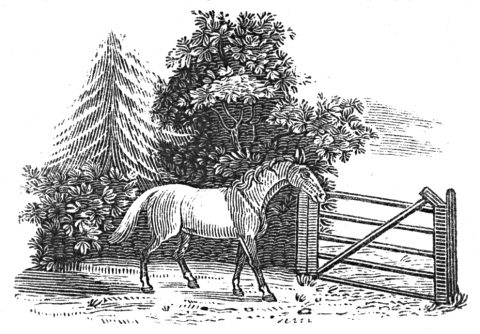 horse and gate