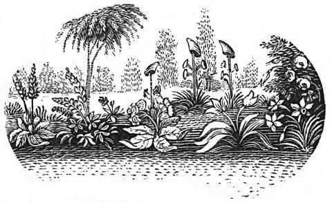garden whimsey