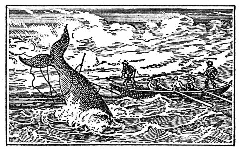 whale being hunted by men in boat
