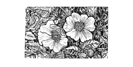 Engraving from A Gathering of Flowers from Shakespeare