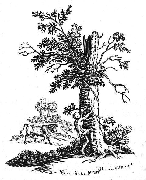 Panicked man climbing tree to escape bull