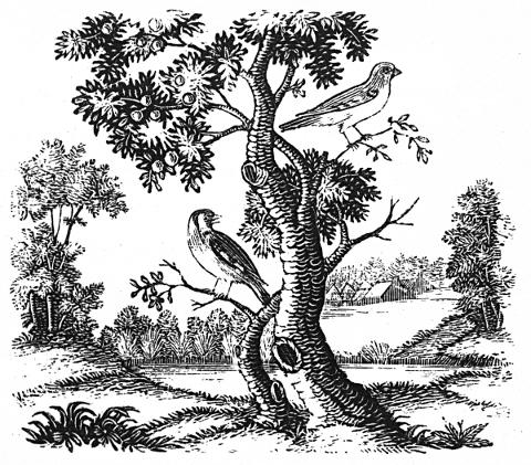 two birds sitting in a leafy tree